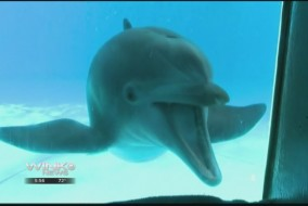 dolphinimage